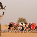 Finding the desert safari trip provider in Dubai