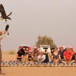 Finding the desert safari trip provider in Dubai